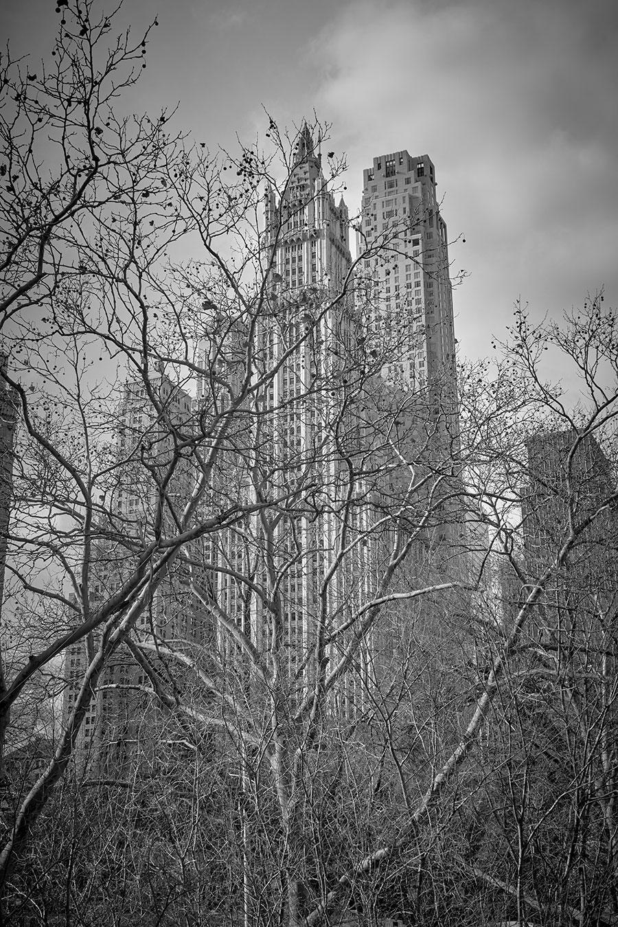 Central Park por Jose Luis Tabueña